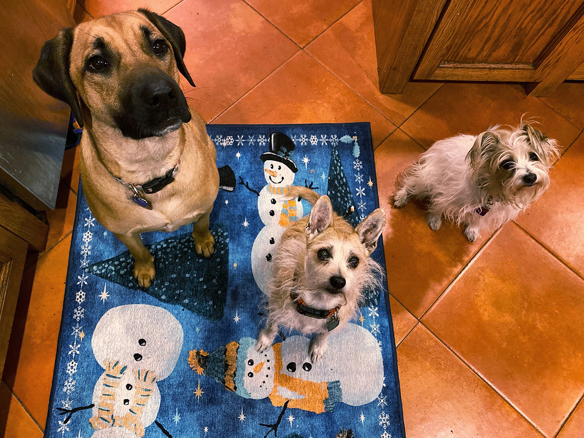 Three dogs sitting for a treat