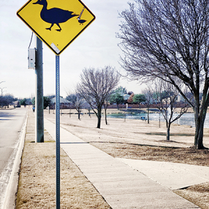 Duck Crossing Warning